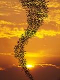 Pipistrelli che pilotano il sole del againt Fotografia Stock Libera da Diritti