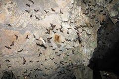 Pipistrelli che volano in caverna di Lanquin, Guatemala Immagini Stock Libere da Diritti