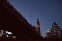 Pipistrelli del ponte del viale del congresso di Austin fotografia stock