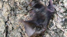 Pipistrelli negli alberi e nella terra video d archivio