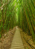 Pipiwai Trail Bamboo Forest Stock Photos