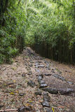 The Pipiwai Trail through the bamboo forest Royalty Free Stock Photography