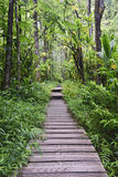 Pipiwai trail, Kipahulu state park, Maui, Hawaii Royalty Free Stock Images