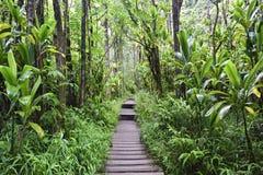 Pipiwai trail, Kipahulu state park, Maui, Hawaii Royalty Free Stock Photo