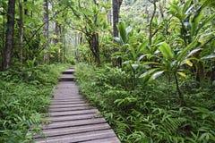 Pipiwai trail, Kipahulu state park, Maui, Hawaii Stock Images