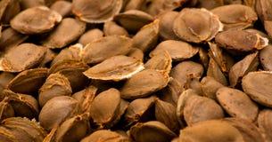 Piqûres d'abricot Photo libre de droits
