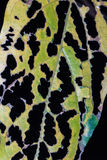 Piqûre d'insectes de feuille Photographie stock libre de droits