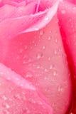 Pique color de rosa Imagen de archivo