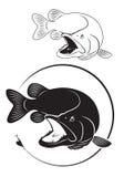 Pique dos peixes Imagens de Stock