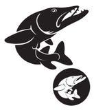 Pique dos peixes Imagem de Stock