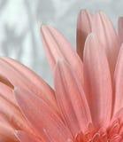Pique a flor Foto de Stock