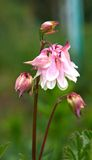Pique la flor Imágenes de archivo libres de regalías