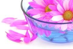Pique las flores Fotografía de archivo libre de regalías