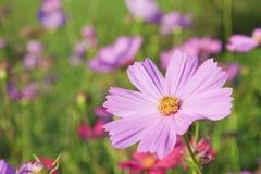 Pique las flores. Imagenes de archivo