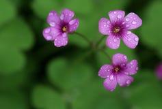 Pique las flores Fotos de archivo libres de regalías
