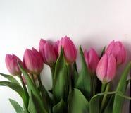 Pique los tulipanes Fotos de archivo