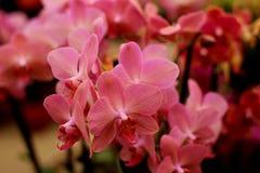 Pique los tulipanes Imagen de archivo
