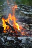 Pique-nique dans la forêt photos libres de droits