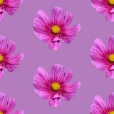 Pique o fundo sem emenda floral Imagem de Stock