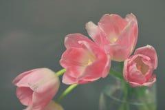 Pique tulips Imagem de Stock