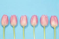 Pique tulips fotos de stock royalty free