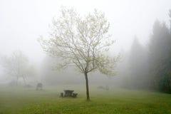 Piquenique com névoa Fotografia de Stock