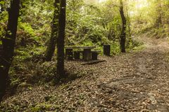 Piquenique de pedra velho na floresta fotografia de stock