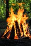 Piquenique do fogo do acampamento Fotos de Stock