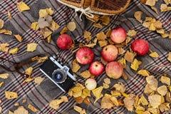 Piquenique na floresta do outono fotos de stock royalty free