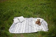 Piquenique na grama com urso de peluche Foto de Stock