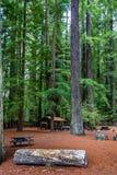 Piquenique nas sequoias vermelhas imagem de stock royalty free