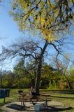 Piquenique no parque de Brackenridge em San Antonio imagem de stock royalty free