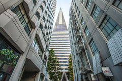 Pirâmide de Transamerica fotos de stock royalty free