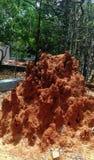 A pirâmide fez por formigas e por moradia pela serpente fotografia de stock