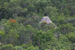 Pirâmide maia de Coba Imagem de Stock