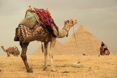Pirâmides e camelos imagens de stock royalty free
