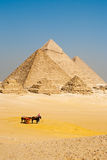 Pirâmides egípcias Giza dos turistas imagens de stock