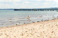 Pir av Gdynia Orlowo på det baltiska havet, Polen Arkivfoton