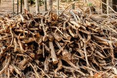 Pira funerária conservada em estoque seca para o combustível usa-se-rem para o cozinheiro e fize-se-rem o calor quando co foto de stock royalty free