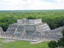 Piramide maya met de wildernis Royalty-vrije Stock Afbeeldingen