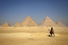 Piramides en alleen kameel, eenzame mensen Stock Foto