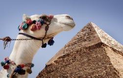 Piramidi di Giza, Cairo fotografia stock libera da diritti