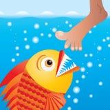 Piranha. Cartoon piranha trying to bite the leg,  illustration additional Royalty Free Stock Image