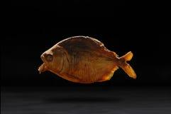 Piranha. Aggressive fish piranha on black background Stock Photography
