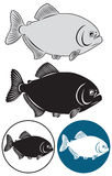 Piranha. The figure shows a piranha fish Royalty Free Stock Image