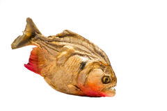 Piranha. A picture of dry piranha profile Royalty Free Stock Photography