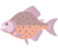 piranha Imagem de Stock Royalty Free