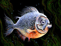 Piranha royalty-vrije stock foto's
