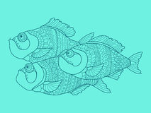 Piranha color drawing vector illustration Royalty Free Stock Photo