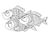 Piranha coloring book for adults vector Royalty Free Stock Photos